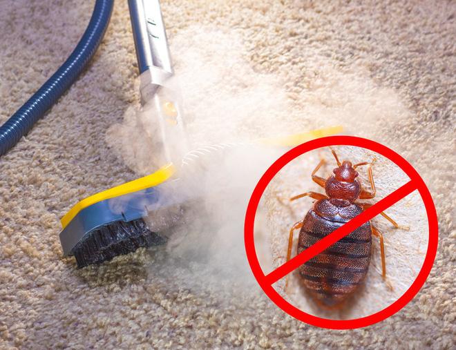 9 cách loại bỏ  lũ côn trùng khó chịu bằng cách tận dụng các sản phẩm tự nhiên có trong nhà - Ảnh 2.