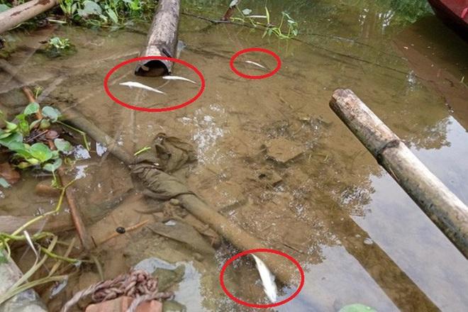 Cá tự nhiên chết bất thường dọc sông - Ảnh 1.