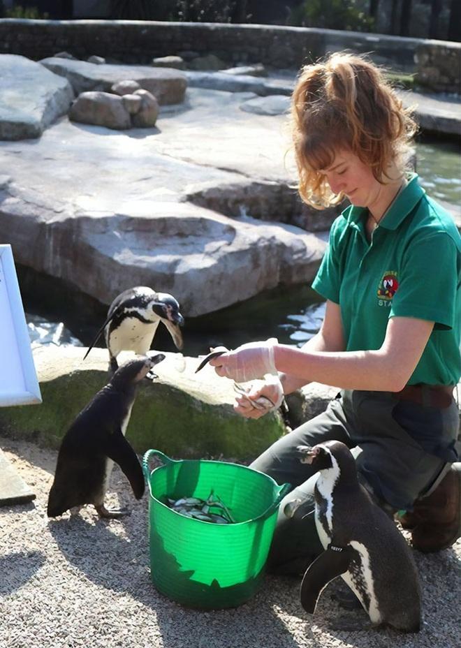Thương động vật côi cút mùa Covid-19, nhân viên khu bảo tồn quyết ở lại cách ly cùng chúng suốt 3 tháng - Ảnh 2.