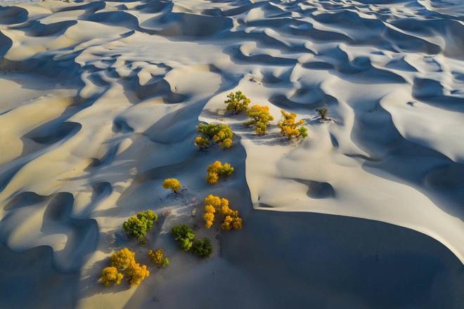 Cảnh nhà sư chèo thuyền chở hoa của nhiếp ảnh gia Việt lọt top ảnh đẹp thế giới - Ảnh 6.