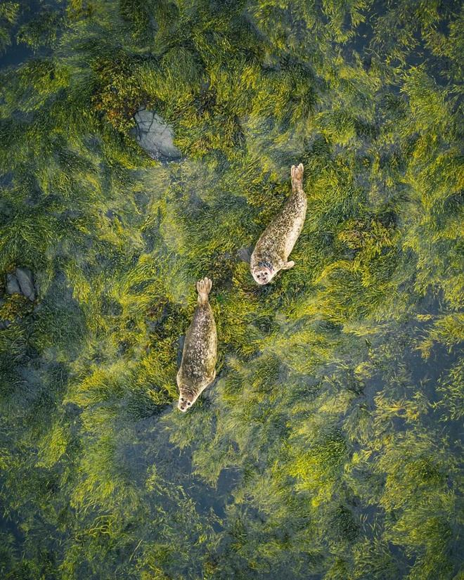 Cảnh nhà sư chèo thuyền chở hoa của nhiếp ảnh gia Việt lọt top ảnh đẹp thế giới - Ảnh 9.
