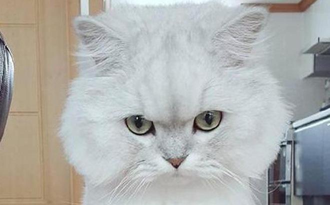 """Chọn chú mèo có gương mặt khó chịu nhất, bạn sẽ biết được mình có dễ yêu nhầm người hay có thể """"đi guốc trong bụng"""" người yêu"""