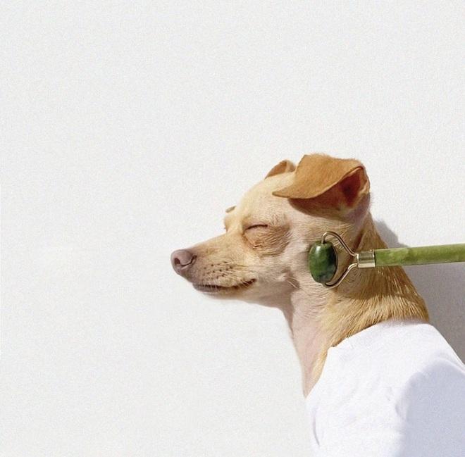 Gặp gỡ chú chó Chihuahua sành điệu nhất thế giới:  Diện đồ hiệu như fashionista thực thụ và có gần 100.000 người hâm mộ trên mạng xã hội - Ảnh 13.