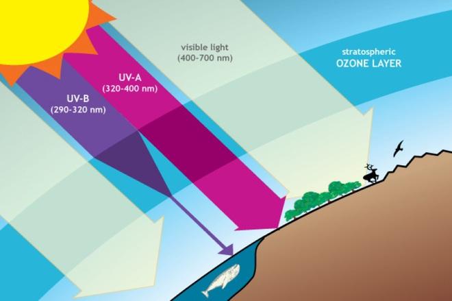 Bắc Cực thủng tầng ozone: Lớn nhất trong 40 năm, giới khoa học lo lắng cho vận mệnh Trái Đất - Ảnh 5.