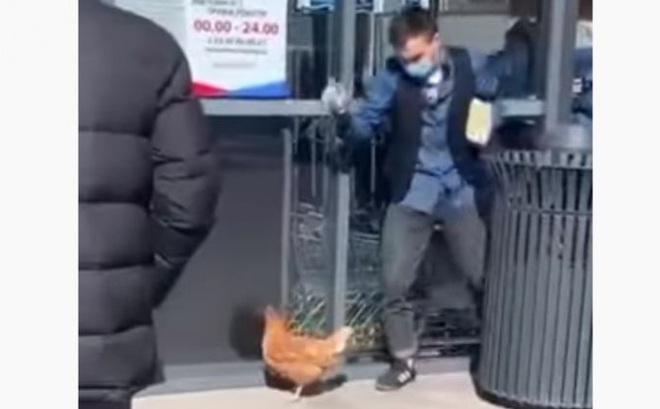 Trốn cách ly ở Nga, Ukraine: Dắt chó đi dạo, dắt gà đến tiệm tạp hóa