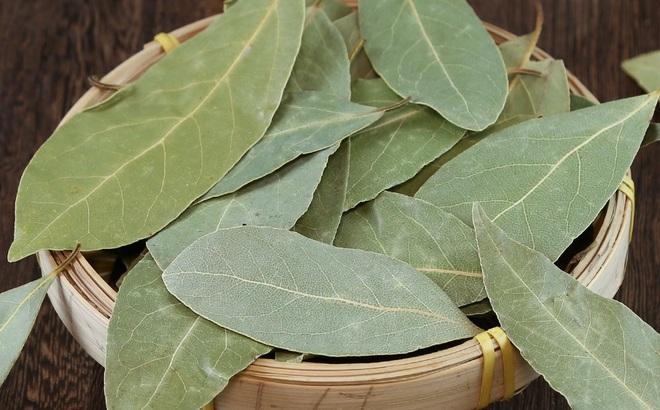"""Trồng một cây nguyệt quế bên hiên nhà: Riêng lá cây đã có 8 lợi ích """"đáng nể"""" cho sức khỏe"""