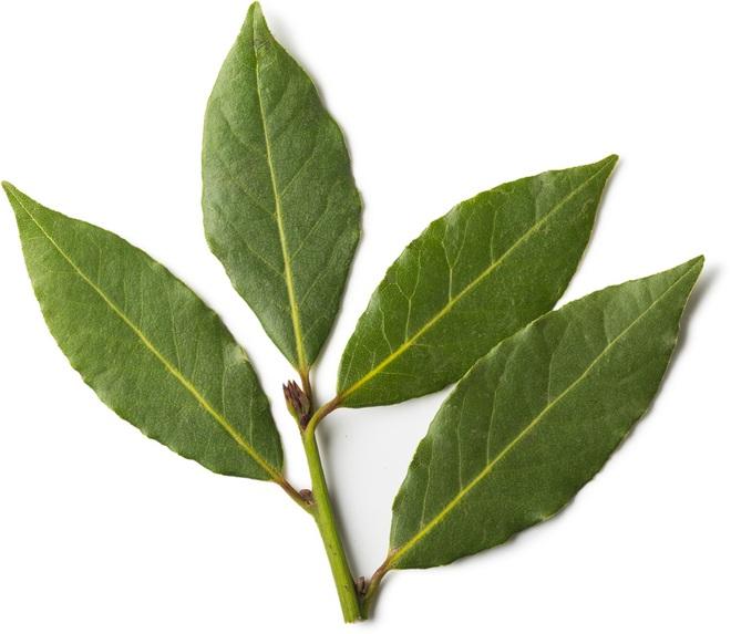 Trồng một cây nguyệt quế bên hiên nhà: Riêng lá cây đã có 8 lợi ích đáng nể cho sức khỏe - Ảnh 1.