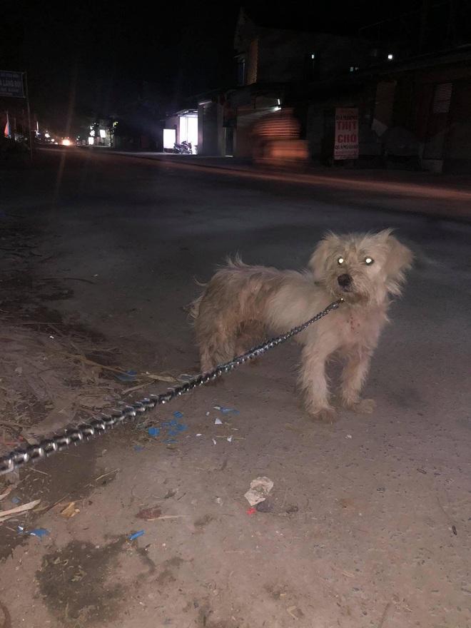 Câu chuyện chú chó đi lạc sau 1 năm và hành trình bất ngờ đoàn tụ với chủ cũ khi được giải cứu ở hàng thịt chó mèo khiến dân mạng vô cùng xúc động - Ảnh 3.