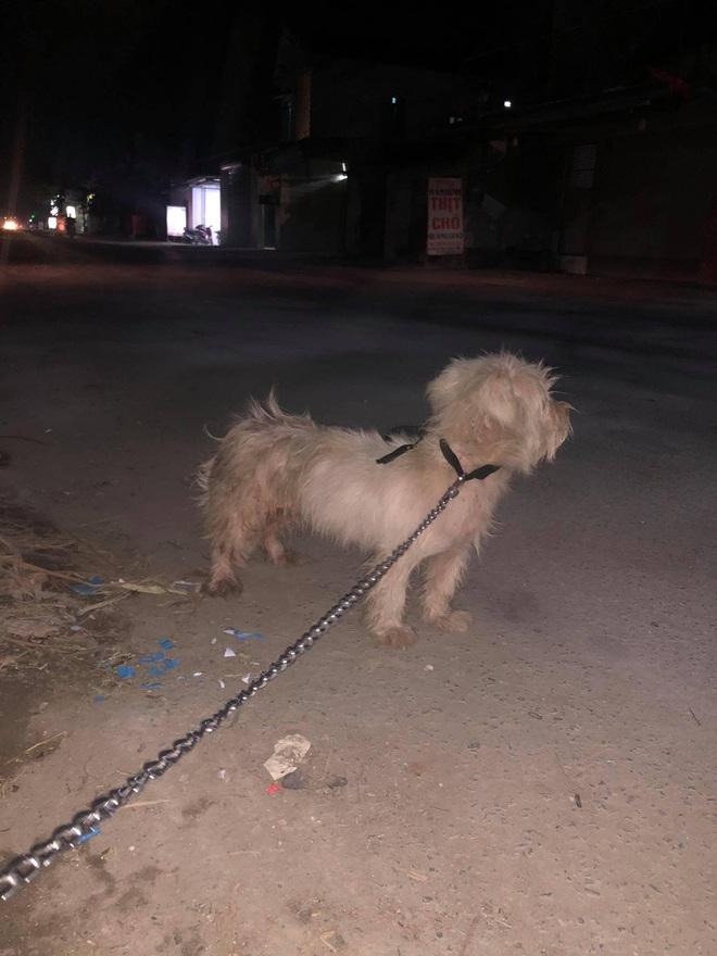 Câu chuyện chú chó đi lạc sau 1 năm và hành trình bất ngờ đoàn tụ với chủ cũ khi được giải cứu ở hàng thịt chó mèo khiến dân mạng vô cùng xúc động - Ảnh 4.