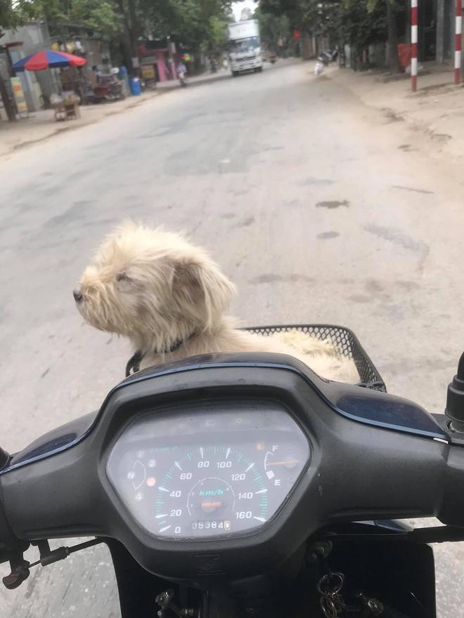 Câu chuyện chú chó đi lạc sau 1 năm và hành trình bất ngờ đoàn tụ với chủ cũ khi được giải cứu ở hàng thịt chó mèo khiến dân mạng vô cùng xúc động - Ảnh 5.