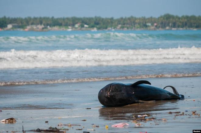 24h qua ảnh: Xác cá voi chết dạt vào bãi biển ở Indonesia - Ảnh 2.