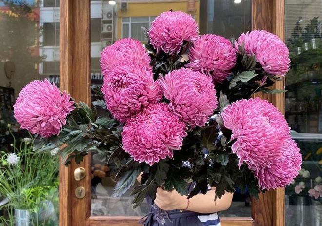 Hoa cúc xanh khổng lồ đắt gấp 20 lần so với hàng chợ có gì đặc biệt mà gây sốt? - Ảnh 1.