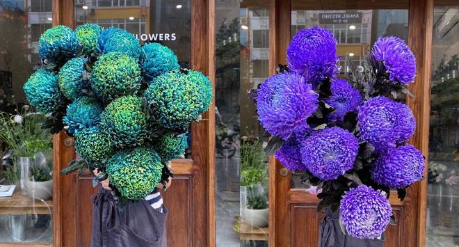 Hoa cúc xanh khổng lồ đắt gấp 20 lần so với hàng chợ có gì đặc biệt mà gây sốt? - Ảnh 2.