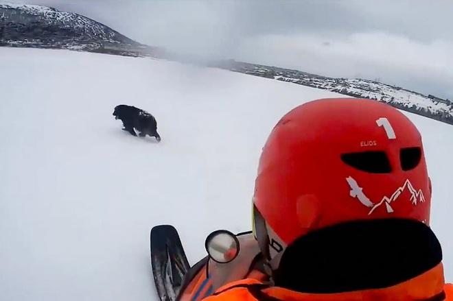 Chú chó kiên quyết nằm 2 tháng trên mặt băng lạnh, khi biết lý do ai cũng nghẹn ngào - Ảnh 2.