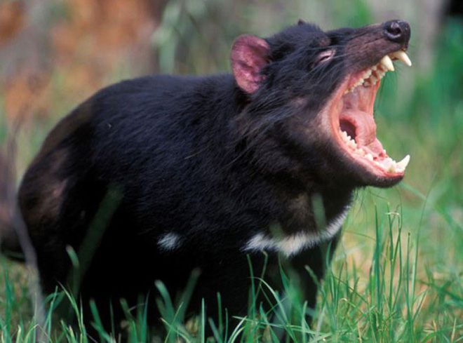 1001 thắc mắc: Loài thú nào ăn nhiều mà không sợ béo? - Ảnh 1.