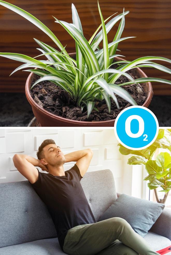 Gợi ý 15 loại cây cảnh bạn nên trồng để vừa làm đẹp nhà vừa tốt cho sức khỏe - Ảnh 3.