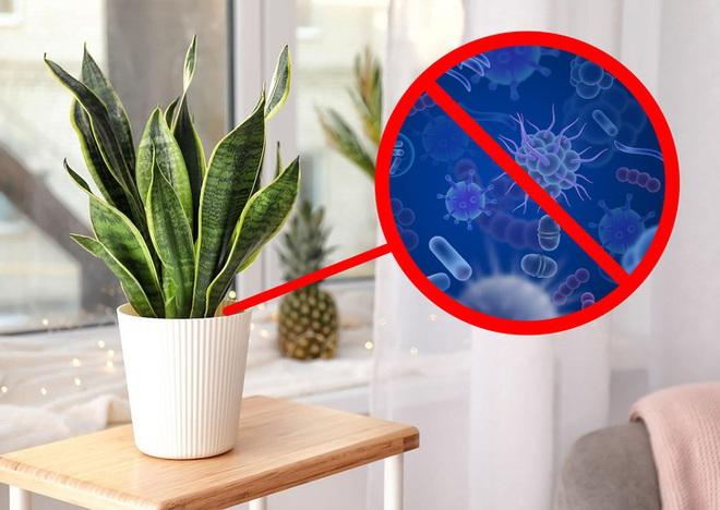 Gợi ý 15 loại cây cảnh bạn nên trồng để vừa làm đẹp nhà vừa tốt cho sức khỏe - Ảnh 5.
