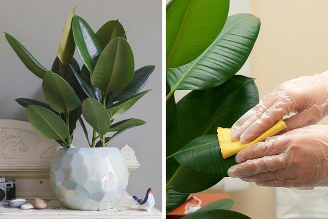 Gợi ý 15 loại cây cảnh bạn nên trồng để vừa làm đẹp nhà vừa tốt cho sức khỏe - Ảnh 11.
