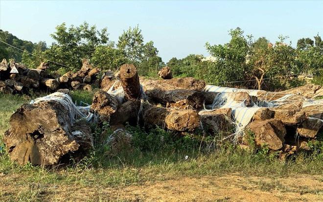 Vụ án khủng ở Lâm Đồng: Gần 200 ha rừng bốc hơi như thế nào? - Ảnh 3.