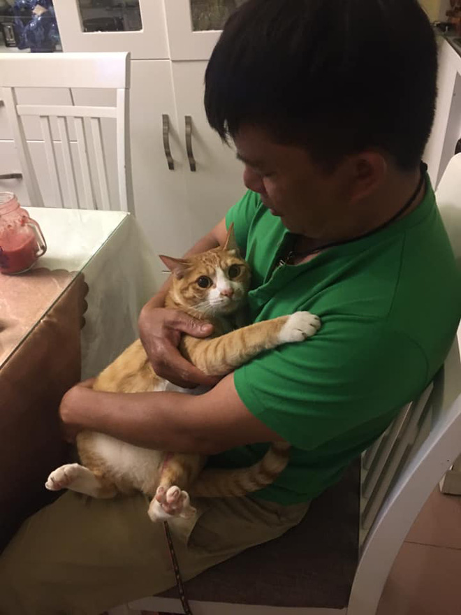 Biểu cảm đầy cảnh giác của boss khi lần đầu tiên được bố sen cưng nựng gây sốt MXH, thì ra lũ mèo có rất nhiều chiêu để lấy lòng phụ huynh! - Ảnh 3.