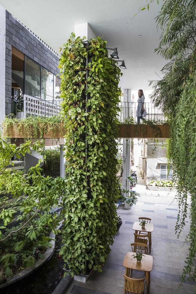 Vườn treo tại Đà Nẵng được cải tạo từ căn nhà xây dang dở xuất hiện long lanh trên báo Mỹ - Ảnh 2.