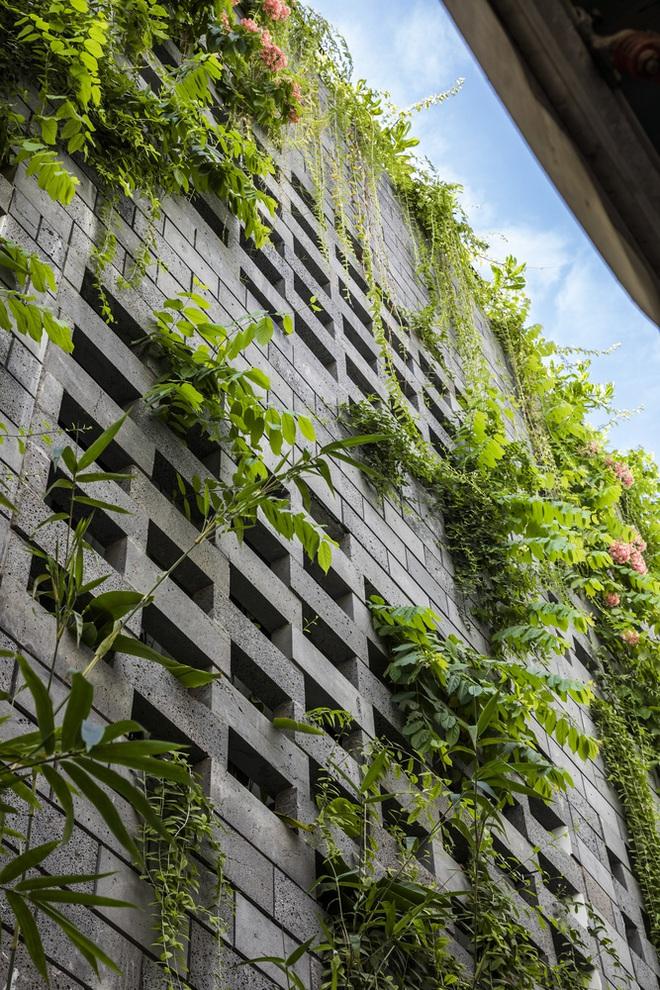 Vườn treo tại Đà Nẵng được cải tạo từ căn nhà xây dang dở xuất hiện long lanh trên báo Mỹ - Ảnh 10.