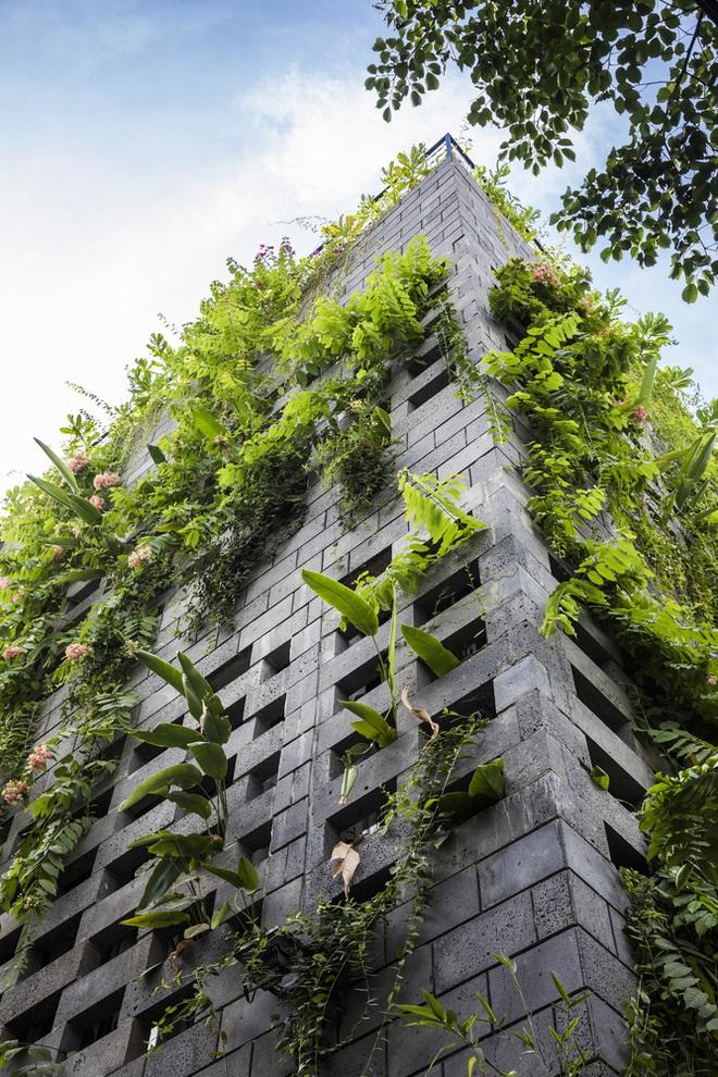 Vườn treo tại Đà Nẵng được cải tạo từ căn nhà xây dang dở xuất hiện long lanh trên báo Mỹ - Ảnh 1.
