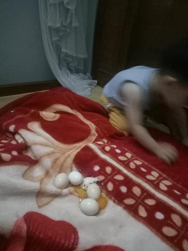 Con trai thắc mắc tự ấp trứng gà cả đêm nhưng sáng không nở, mẹ phát khóc vì cảnh tượng trên giường - Ảnh 2.