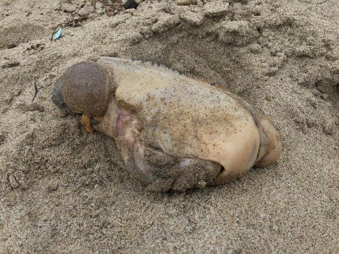 Video: Quái vật biển không mắt, không mồm cực độc tiết dịch nhầy kinh sợ trên cạn - Ảnh 3.