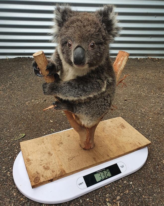 Nhân viên chăm sóc động vật chia sẻ trăm phương ngàn kế hết sức đáng yêu để có thể cân các bé động vật sơ sinh - Ảnh 12.