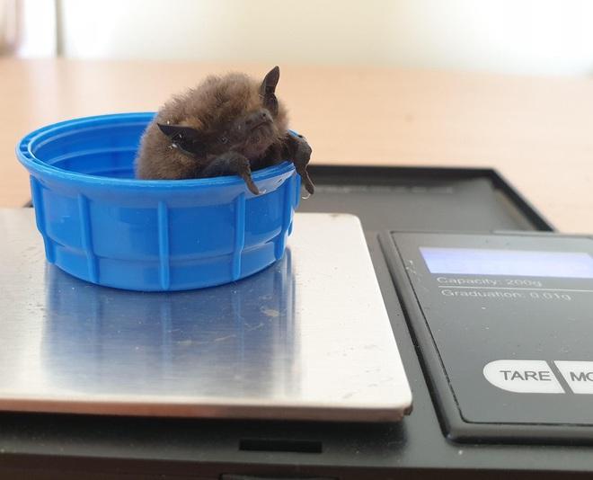 Nhân viên chăm sóc động vật chia sẻ trăm phương ngàn kế hết sức đáng yêu để có thể cân các bé động vật sơ sinh - Ảnh 6.