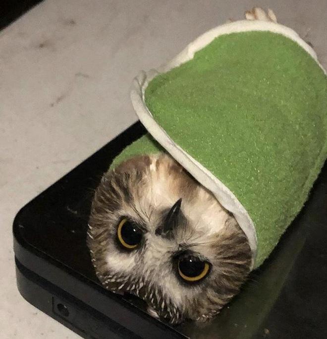 Nhân viên chăm sóc động vật chia sẻ trăm phương ngàn kế hết sức đáng yêu để có thể cân các bé động vật sơ sinh - Ảnh 8.
