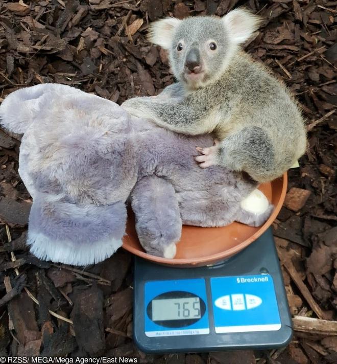 Nhân viên chăm sóc động vật chia sẻ trăm phương ngàn kế hết sức đáng yêu để có thể cân các bé động vật sơ sinh - Ảnh 10.