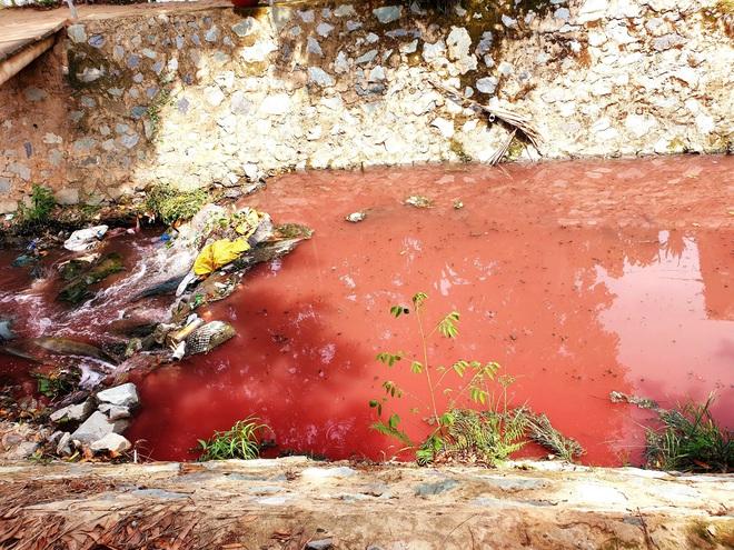 Con suối nhuốm màu đỏ tươi như máu rồi tràn vào các ruộng rau muống ở Bình Dương - Ảnh 2.