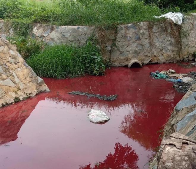 Người dân ở Bình Dương hoảng sợ vì con suối nhuốm màu đỏ tươi như máu tràn vào các ruộng rau muống