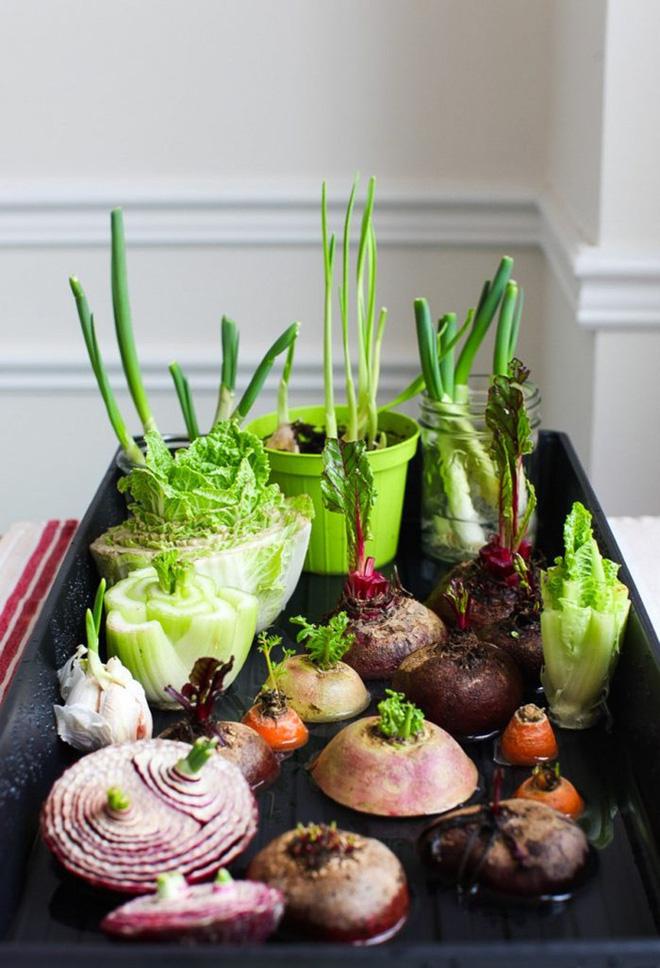 Sở hữu vườn rau gia vị xanh tốt từ phế liệu đơn giản và tiết kiệm cho góc bếp mùa hè luôn thơm - Ảnh 2.
