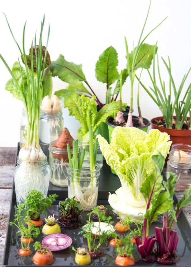 Sở hữu vườn rau gia vị xanh tốt từ phế liệu đơn giản và tiết kiệm cho góc bếp mùa hè luôn thơm - Ảnh 3.