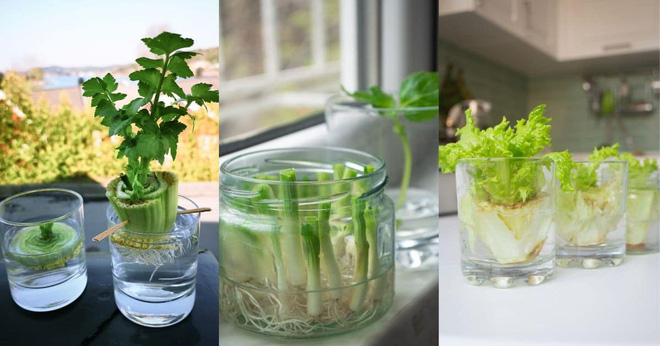 Sở hữu vườn rau gia vị xanh tốt từ phế liệu đơn giản và tiết kiệm cho góc bếp mùa hè luôn thơm - Ảnh 21.