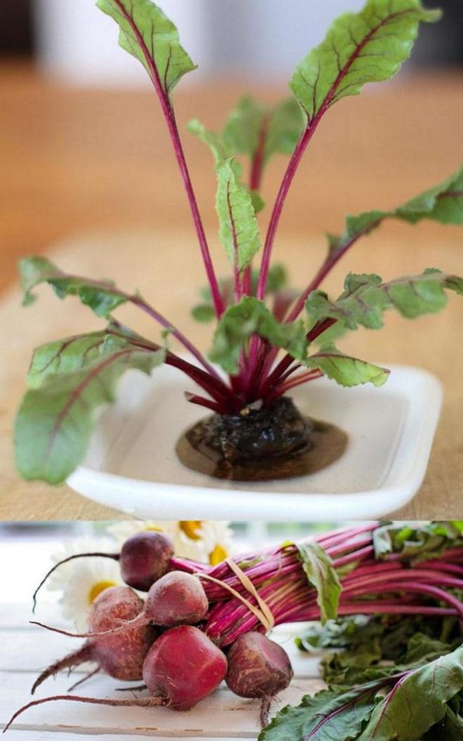 Sở hữu vườn rau gia vị xanh tốt từ phế liệu đơn giản và tiết kiệm cho góc bếp mùa hè luôn thơm - Ảnh 13.