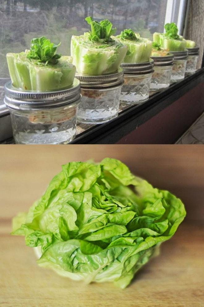 Sở hữu vườn rau gia vị xanh tốt từ phế liệu đơn giản và tiết kiệm cho góc bếp mùa hè luôn thơm - Ảnh 15.