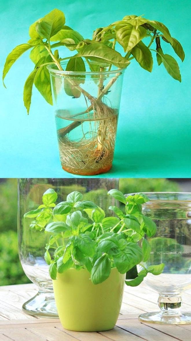 Sở hữu vườn rau gia vị xanh tốt từ phế liệu đơn giản và tiết kiệm cho góc bếp mùa hè luôn thơm - Ảnh 16.