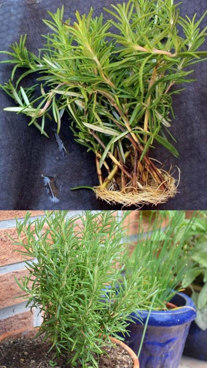 Sở hữu vườn rau gia vị xanh tốt từ phế liệu đơn giản và tiết kiệm cho góc bếp mùa hè luôn thơm - Ảnh 19.