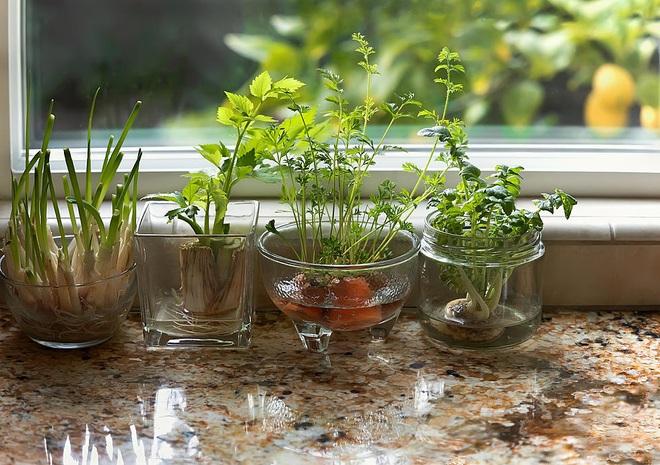Sở hữu vườn rau gia vị xanh tốt từ phế liệu đơn giản và tiết kiệm cho góc bếp mùa hè luôn thơm - Ảnh 22.