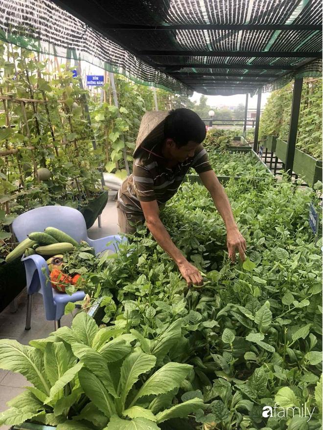 Doanh nhân Sài Gòn trồng cả vườn rau như trang trại và hồ sen trên sân thượng rộng 300m²  - Ảnh 22.