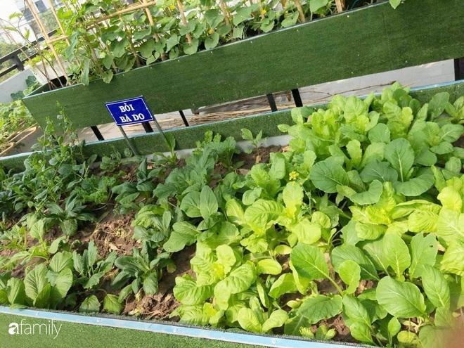 Doanh nhân Sài Gòn trồng cả vườn rau như trang trại và hồ sen trên sân thượng rộng 300m²  - Ảnh 23.