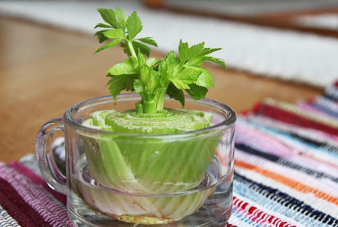 Sở hữu vườn rau gia vị xanh tốt từ phế liệu đơn giản và tiết kiệm cho góc bếp mùa hè luôn thơm - Ảnh 8.