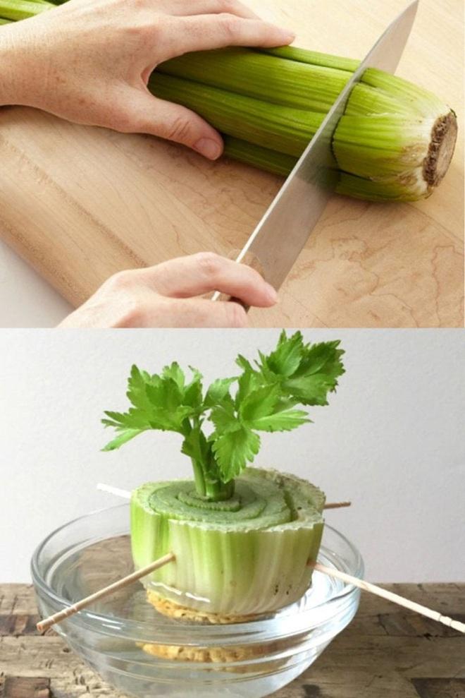 Sở hữu vườn rau gia vị xanh tốt từ phế liệu đơn giản và tiết kiệm cho góc bếp mùa hè luôn thơm - Ảnh 9.