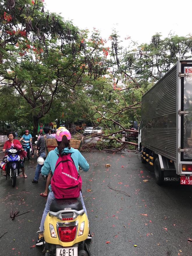 TP.HCM: Phượng vĩ lại bật gốc, đè xe tải sau trận mưa lớn kéo dài 30 phút - Ảnh 1.