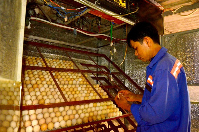 Anh công nhân lao động xuất khẩu đưa giống gà ô độc nhất vô nhị về Việt Nam - Ảnh 1.