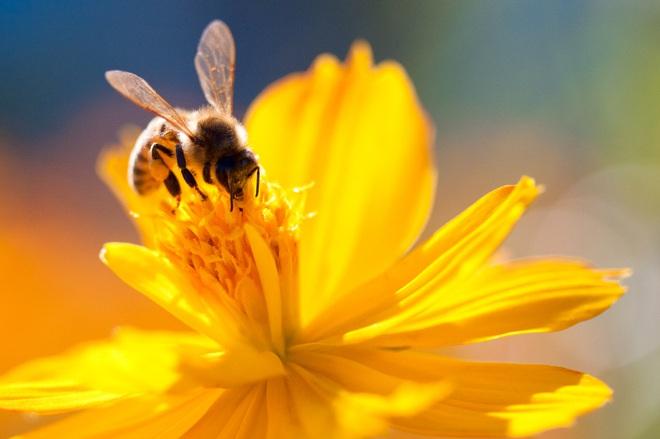 Đặc quyền được chết của ong đực: Bài học thấm thía cho con người từ thế giới khắc nghiệt của loài ong - Ảnh 2.